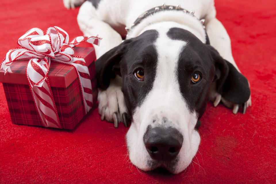 Have yourself a meowy little Christmas with these great gift ideas for pet owners.