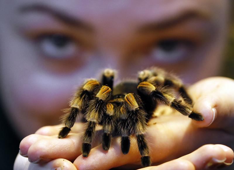 Zoo count begins: No creature too small to count