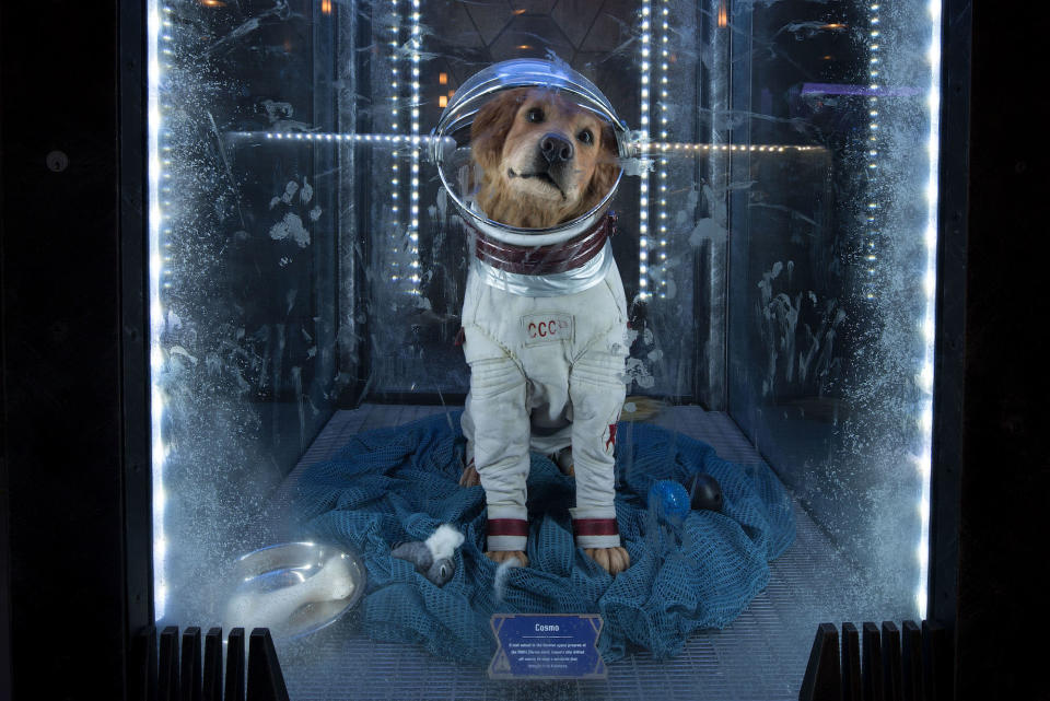 <p>The sentient Soviet canine cosmonaut was a key member of the Guardians of the Galaxy in the comics and has made cameos in both films. He's among the most treasured exhibits in the Collector's museum. (Photo: Disneyland Resort) </p>