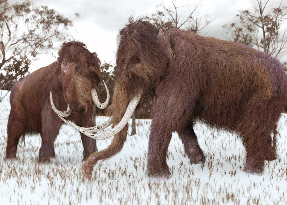 A firm raises $15m to bring back woolly mammoth from extinction