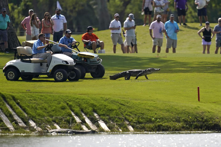 Tournament officials use golf carts to coax an alligator off of the 17th fairway and back into the water during the third round of the PGA Zurich Classic golf tournament at TPC Louisiana in Avondale, La., Saturday, April 24, 2021. (AP Photo/Gerald Herbert)