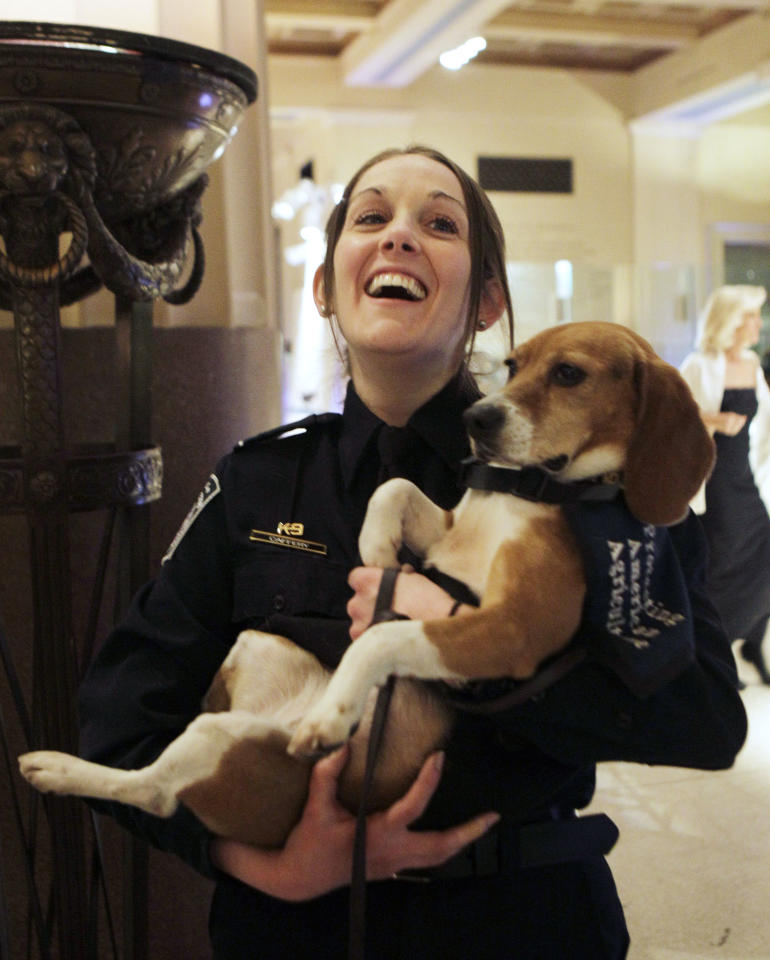 Meghan Caffery, a U.S. Customs and Border Patrol agent, holds Izzy, an agricultural products sniffer beagle, at The Animal Medical Center's Top Dog Gala at the Museum of Natural History in New York, Thursday, Dec. 9, 2010. The beagle was one of nine dogs attending the gala and awards ceremony.