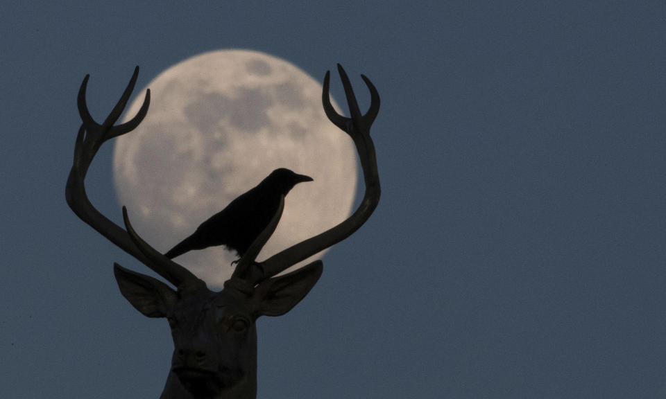 18 February 2019, Baden-Wuerttemberg, Stuttgart: A crow sits on the golden stag of the sculptor Ludwig Habich on the roof of the art building at the Schlo'platz in front of the almost full moon.