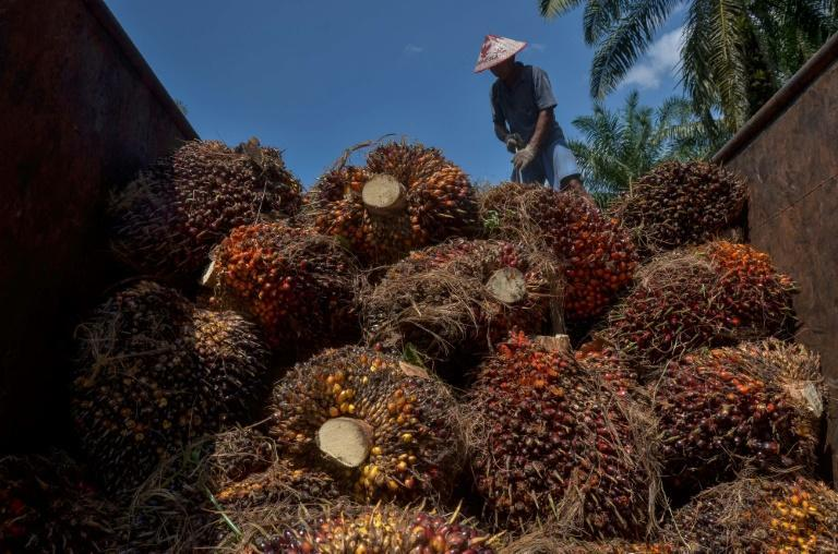 Palm oil is a common ingredient in items ranging from processed foods to cosmetics, and Malaysia is the second-biggest producer of the commodity