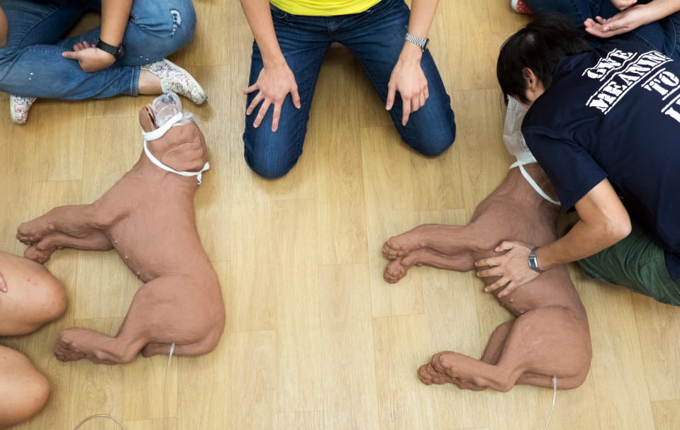 <span>An increasing number of people in Singapore are taking up courses to pick up life-saving skills specific to household pets such as dogs, cats, rabbits and guinea pigs. </span>(PHOTO: Dog First Aid)