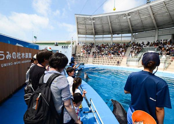 ▲ From the stage of the Umino-Mori Stadium you can see the pool and dolphins from an angle not possible from the stadium seats. Being able to get just a dozen or so centimeters away from the water is exciting.