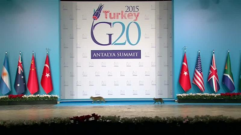 Catwalk at the G20