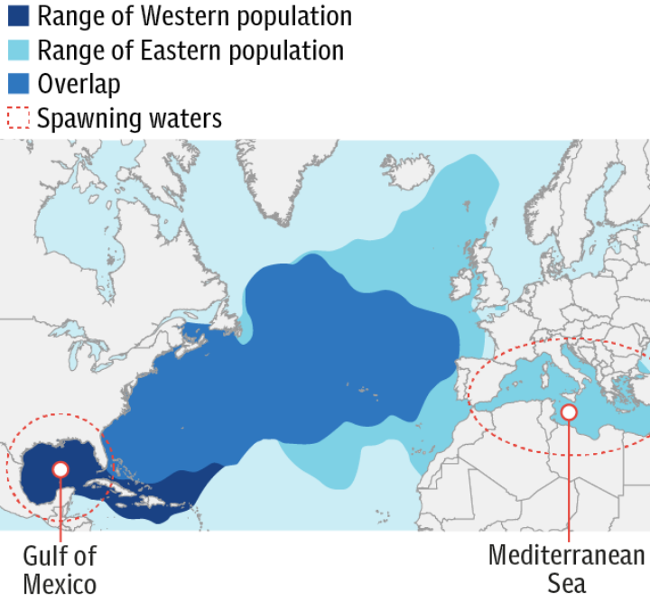 Where tuna are found and breed