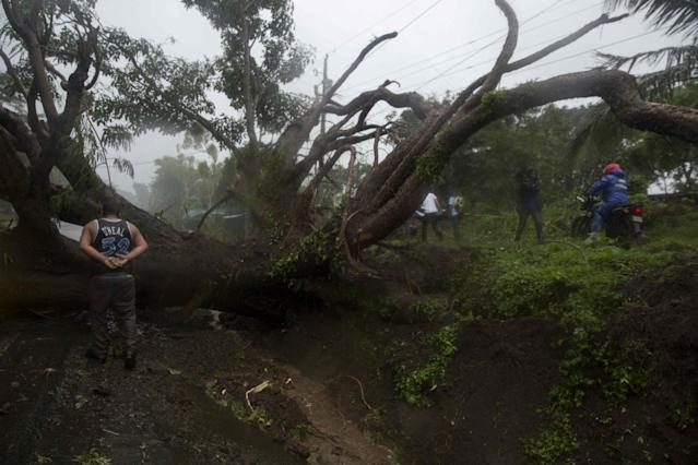 <p>A man walks by a fallen tree after the passing of Storm Nate on the road to Masaya in Managua, Nicaragua on Oct. 6, 2017. (Photo: Jorge Torres/EFE via ZUMA Press) </p>