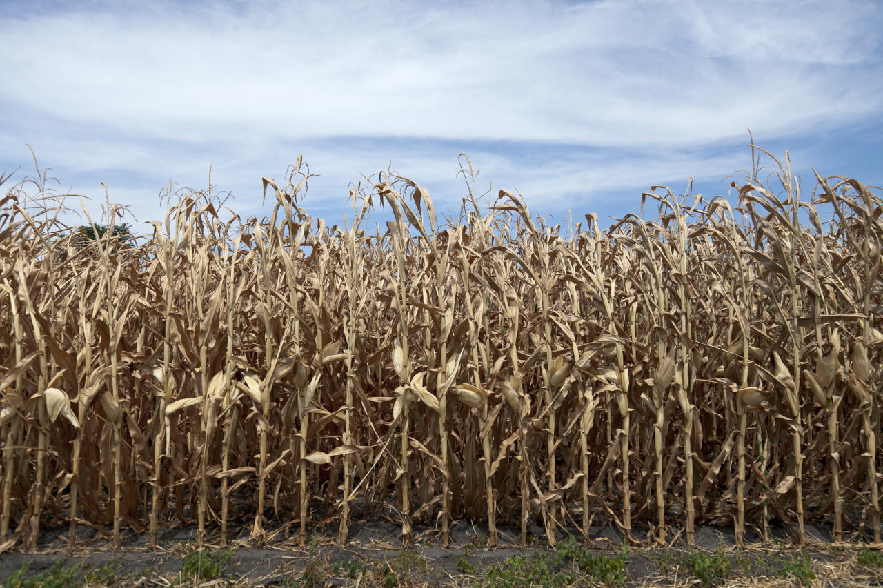 Thousands of farmers filed crop insurance claims in 2012 as drought and triple-digit temperatures burnt up much of the corn belt. (Nati Harnik/AP Photo)