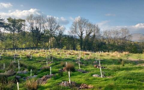Up to 120 million new trees should be planted every week under the proposals