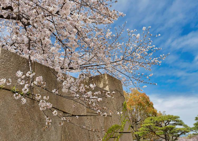 There are many areas for beautiful photography like the castle's stone walls.