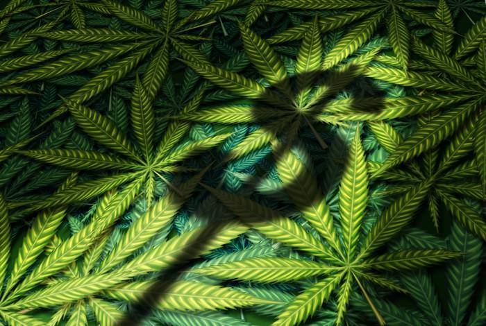 Shadow of dollar sign on a pile of cannabis leaves