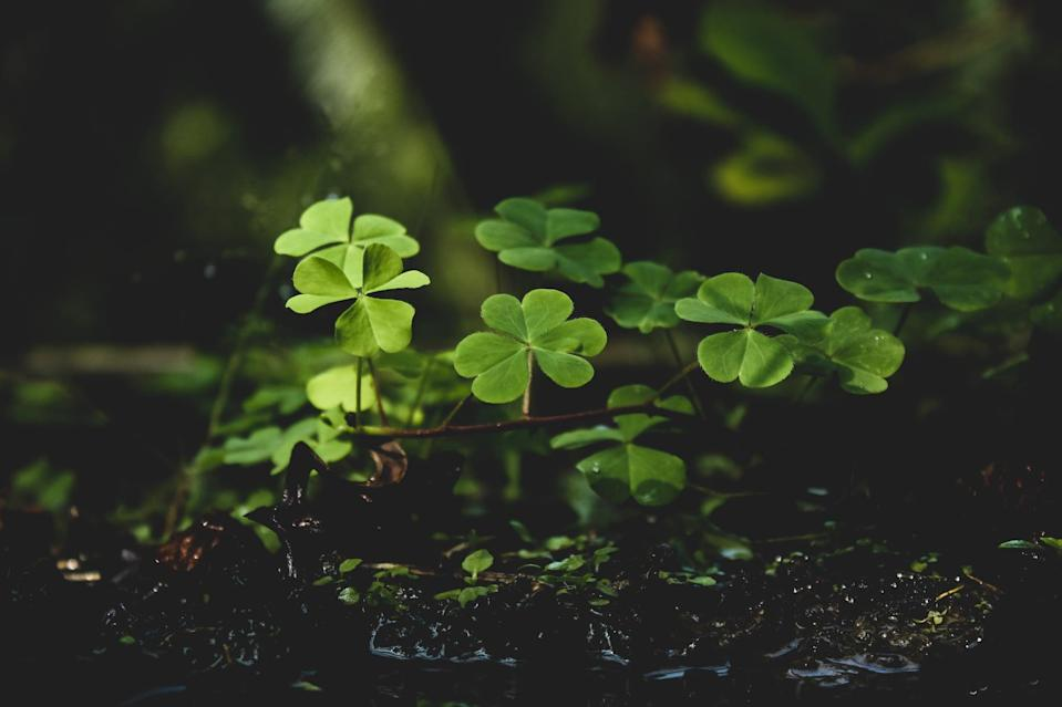 "<p> There has to be a leprechaun somewhere in this earthy backdrop. </p> <p> <a href=""http://media1.popsugar-assets.com/files/2021/02/12/040/n/1922507/a36469acb25efce5_pexels-sudipta-mondal-1441460/i/st-patricks-day-zoom-backgrounds.jpg"" class=""link rapid-noclick-resp"" rel=""nofollow noopener"" target=""_blank"" data-ylk=""slk:Download this Zoom background image here."">Download this Zoom background image here.</a> </p>"