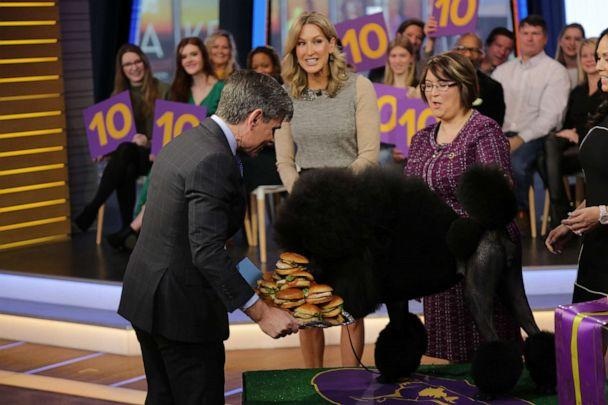 PHOTO: Best in Show winner Siba the standard poodle is presented with a platter of grilled chicken sandwiches on 'Good Morning America.' (ABC News)