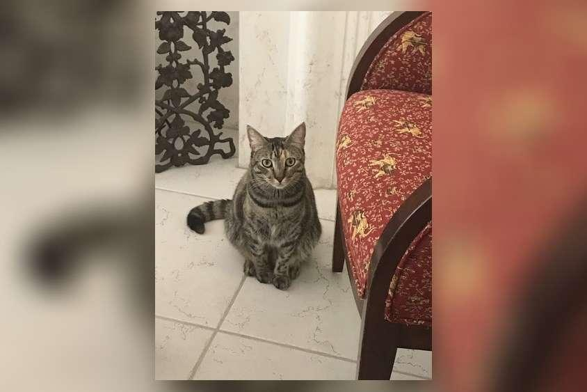 Mia, a 4-year-old rescue cat who lived with Susana Alvarez in Unit 1006 in Champlain Towers South in Surfside, Fla.