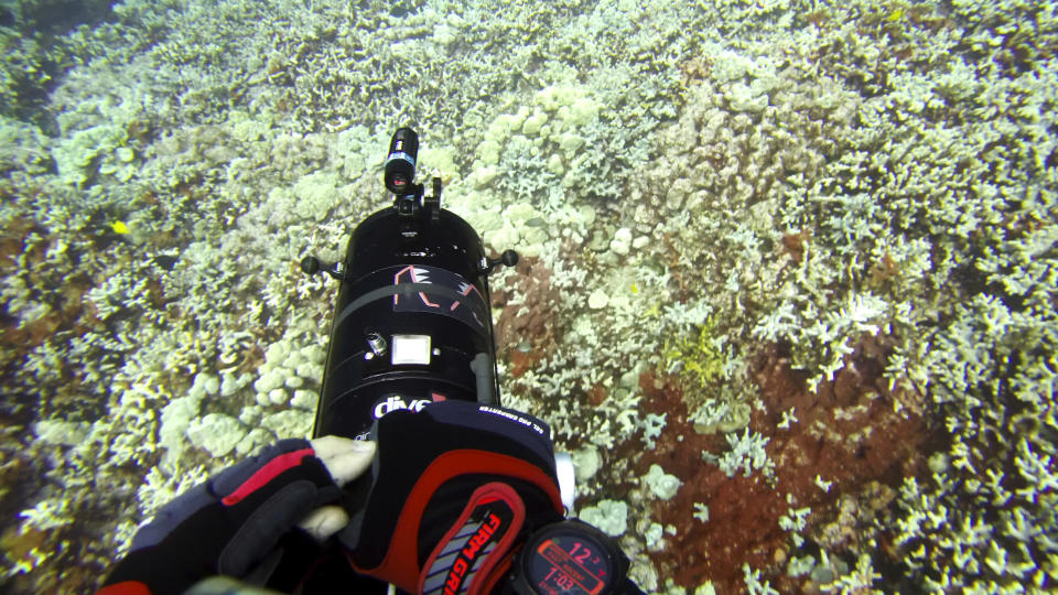 """In this Sept. 13, 2019 image taken from video provided by Arizona State University's Center for Global Discovery and Conservation Science, ecologist Greg Asner dives over a coral reef in Papa Bay near Captain Cook, Hawaii. """"Nearly every species that we monitor has at least some bleaching,"""" Asner said. (Greg Asner/Arizona State University's Center for Global Discovery and Conservation Science via AP)"""