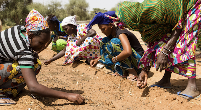 <p>Women planting along the Great Green Wall</p> (greatgreenwall.org)