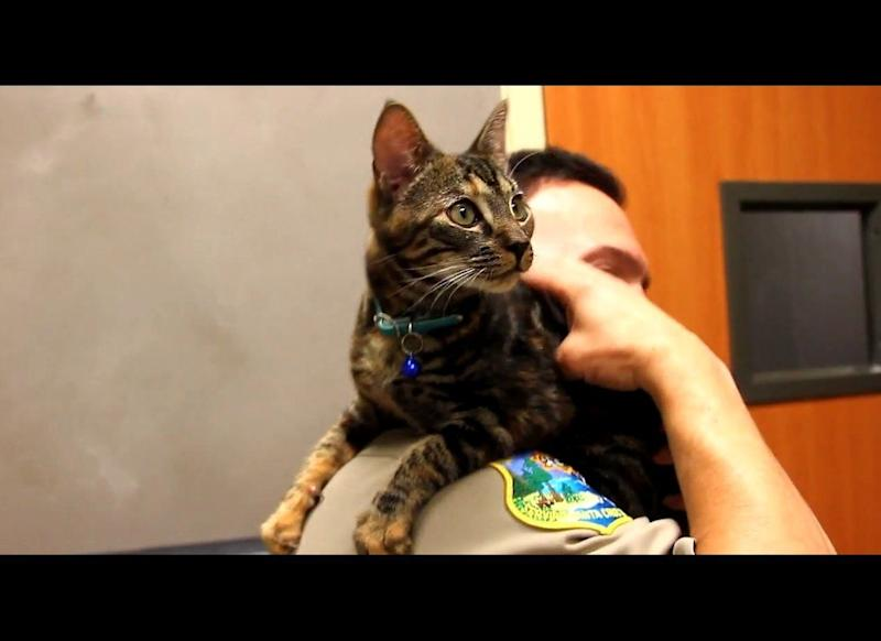 After driving about 85 miles to Santa Cruz, Calif., a man discovered that this runaway kitten had been inside his car's engine in March 2012.