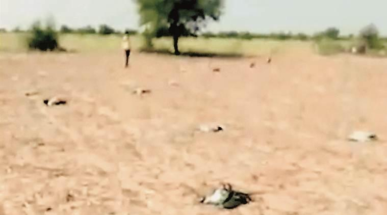 Gujarat: 56 migratory cranes dead as hailstorm pounds Kutch village
