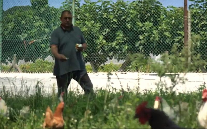 A prisoner feeds chickens on Gorgona
