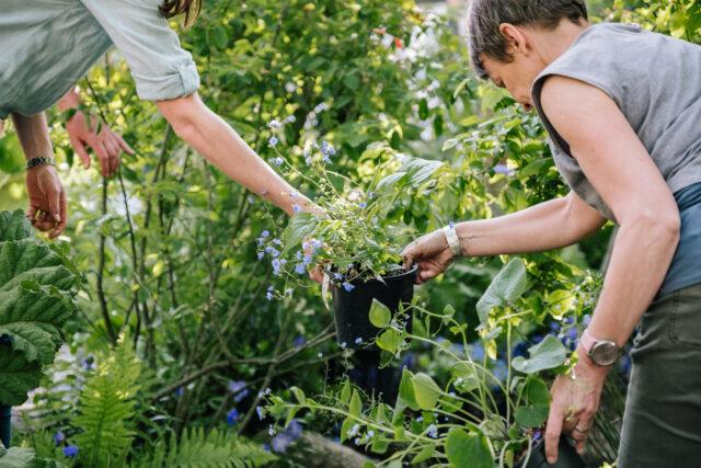 Kate's involvement with the 2019 RHS Garden at the Chelsea Flower Show was first revealed earlier in the year