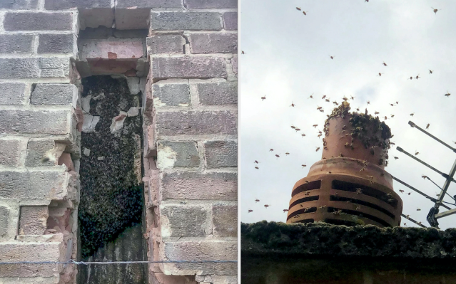 The bees were living in the chimney of a detached home in Groby, Leicestershire. (SWNS)
