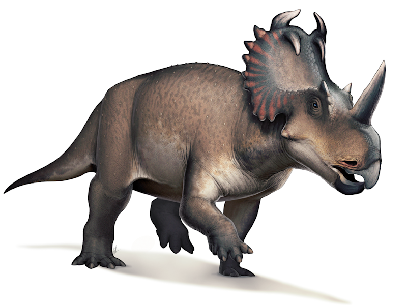 Centrosaurus was a horned dinosaur which lived around 75 million years ago in what is now Alberta Canada: Fred Weirum/Creative Commons