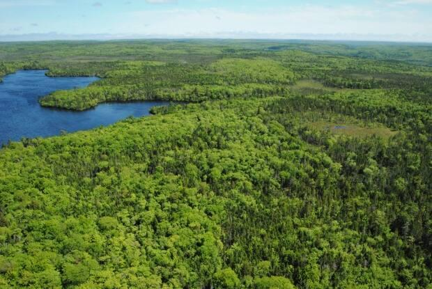 Archibald Lake in Guysborough County is being considered for a wilderness area designation, but the government has no information about when a decision will be made. (Nova Scotia Environment - image credit)