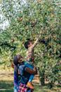 """<p>Apple picking is a staple fall activity, and there are so many places offering safe, socially distant visits to the orchard. Check out our running list of <a href=""""https://www.delish.com/food/g3017/apple-picking/"""" rel=""""nofollow noopener"""" target=""""_blank"""" data-ylk=""""slk:best orchards to visit"""" class=""""link rapid-noclick-resp"""">best orchards to visit</a> across the nation, and get ready to bake some <a href=""""https://www.delish.com/cooking/recipe-ideas/recipes/a55693/best-homemade-apple-pie-recipe-from-scratch/"""" rel=""""nofollow noopener"""" target=""""_blank"""" data-ylk=""""slk:apple pie"""" class=""""link rapid-noclick-resp"""">apple pie</a>.</p><p><a class=""""link rapid-noclick-resp"""" href=""""https://www.delish.com/food/g3017/apple-picking/"""" rel=""""nofollow noopener"""" target=""""_blank"""" data-ylk=""""slk:FIND AN ORCHARD NEAR YOU"""">FIND AN ORCHARD NEAR YOU</a></p>"""