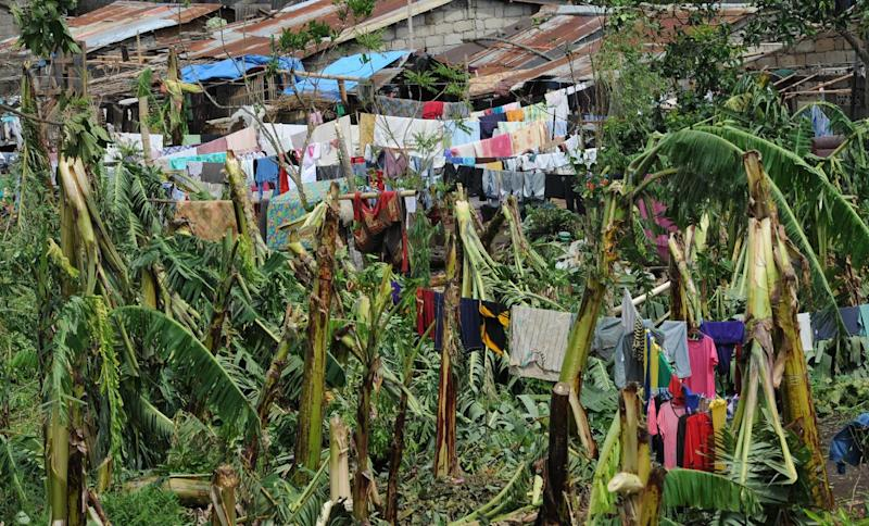 Residents dry their clothes on fallen banana trees, in Tanuan town, Batangas City, southwest of Manila on July 17, 2014, a day after Typhoon Rammasun barrelled through (AFP Photo/Ted Aljibe)