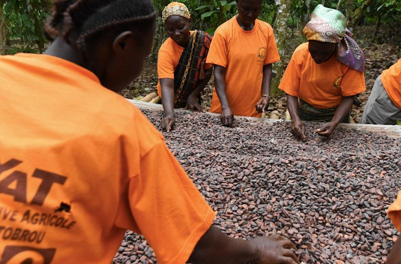 Ivory Coast and Ghana together produce 60 percent of the world's cocoa