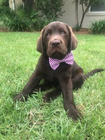 Samuel wanted to show off his bow tie for National Dog Day.