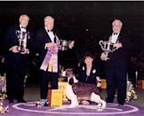 <p>Samantha, an English springer spaniel, took the top prize at the turn of the new millennium.</p>