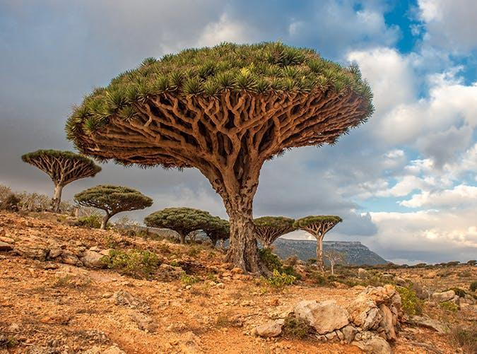 <p>Often described as the most alien-looking place on earth, this small island in the Arabian Sea is known for its unique dragon blood trees. In fact, about a third of the plant life in Socotra exists nowhere else in the world.</p>