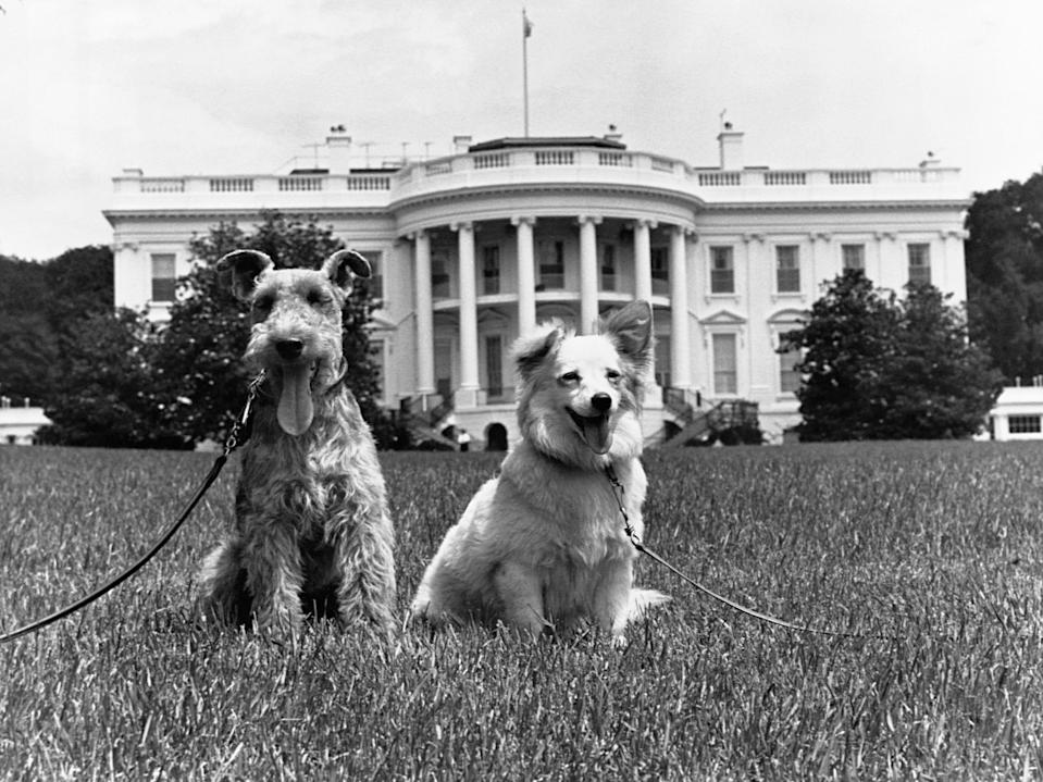 kennedy family dogs at the white house