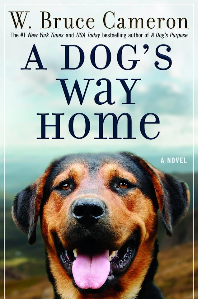 "<ul> <li> <strong>What it's about:</strong> A lost pup travels 400 miles to find her way home.</li> <li> <strong>Who's starring:</strong> Bryce Dallas Howard, <a class=""sugar-inline-link ga-track"" title=""Latest photos and news for Ashley Judd"" href=""https://www.popsugar.co.uk/Ashley-Judd"" target=""_blank"" data-ga-category=""Related"" data-ga-label=""https://www.popsugar.co.uk/Ashley-Judd"" data-ga-action=""&lt;-related-&gt; Links"">Ashley Judd</a>, and more.</li> <li>Watch the <a href=""https://www.youtube.com/watch?v=1pKdCHvH310"" target=""_blank"" class=""ga-track"" data-ga-category=""Related"" data-ga-label=""https://www.youtube.com/watch?v=1pKdCHvH310"" data-ga-action=""In-Line Links"">trailer for <strong>A Dog's Way Home</strong></a>.</li> <li>Read <a href=""https://www.popsugar.com/buy?url=https%3A%2F%2Fwww.amazon.com%2FDogs-Way-Home-Novel%2Fdp%2F076537465X%2F&p_name=%3Cstrong%3EA%20Dog%27s%20Way%20Home%3C%2Fstrong%3E&retailer=amazon.com&evar1=buzz%3Auk&evar9=45432193&evar98=https%3A%2F%2Fwww.popsugar.com%2Fentertainment%2Fphoto-gallery%2F45432193%2Fimage%2F45432225%2FDog-Way-Home-W-Bruce-Cameron&list1=movies%2Cbooks%2Cbooks%20to%20movies%2Cbest%20of%202019&prop13=api&pdata=1"" rel=""nofollow"" data-shoppable-link=""1"" target=""_blank"" class=""ga-track"" data-ga-category=""Related"" data-ga-label=""https://www.amazon.com/Dogs-Way-Home-Novel/dp/076537465X/"" data-ga-action=""In-Line Links""><strong>A Dog's Way Home</strong></a>.</li> <li> <strong>Release date:</strong> Jan. 11</li> </ul>"