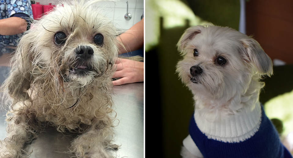 Zoe was lucky to survive after being rescued from a hot car in South Australia. Source: RSPCA SA