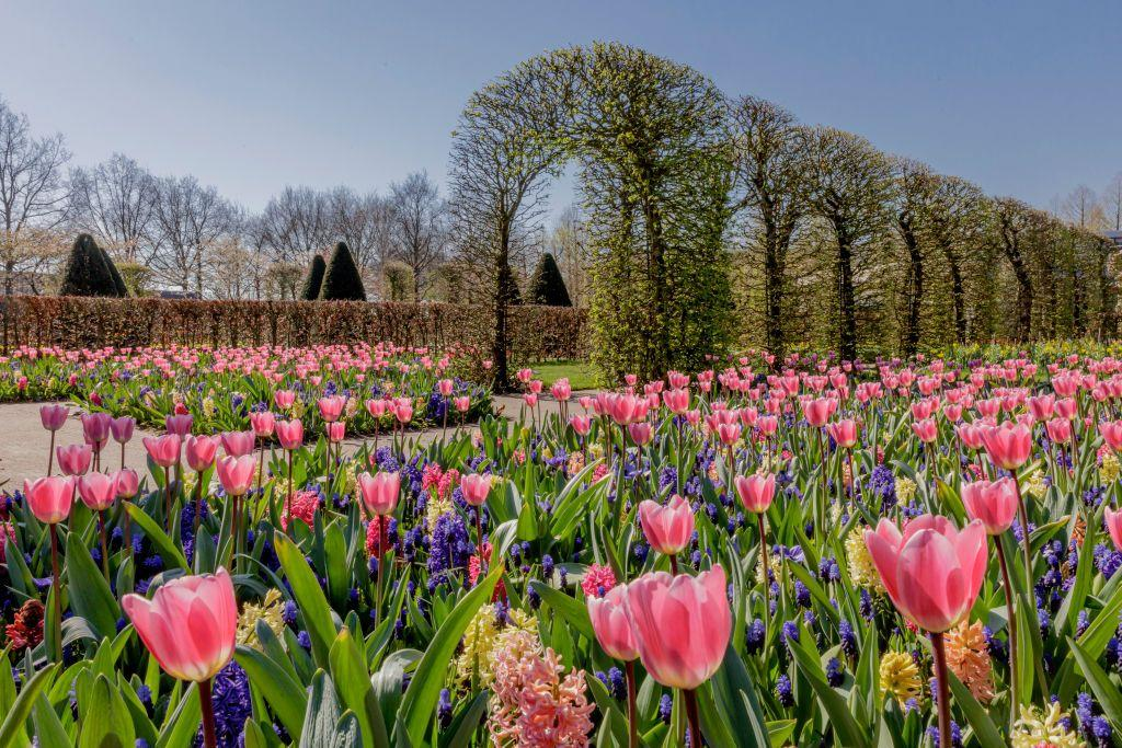 "<p>When it comes to floral wonderlands, you won't find a better place for a spring escape than the Netherlands when its famous Keukenhof Gardens open for just a few weeks of the year. Known as the Garden of Europe, Keukenhof sees around seven million bulbs planted each year, with over 800 varieties of tulips from the best Dutch producers, along with hyacinths, daffodils, roses and more. </p><p>You can explore Keukenhof on an exclusive mini-cruise to Amsterdam in April 2021, where you'll be joined by Gardeners' World presenter Adam Frost, who will pass on his gardening tips and answer your questions. </p><p><a class=""body-btn-link"" href=""https://www.primaholidays.co.uk/tours/netherlands-holland-tulips-cruise-adam-frost"" target=""_blank"">FIND OUT MORE</a></p>"