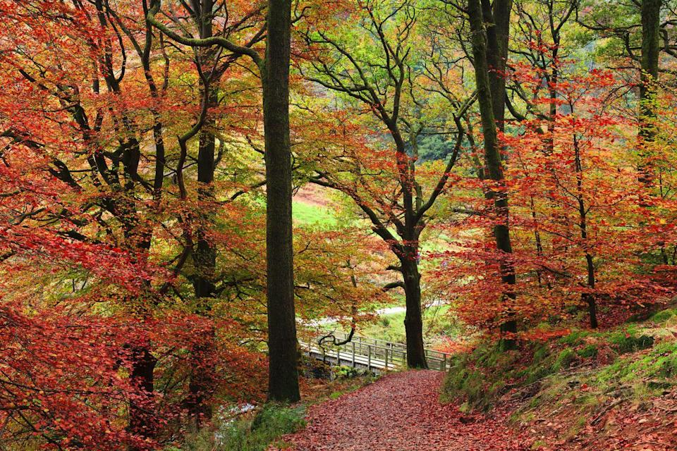 <p>A walk down this dreamy path couldn't be any more picturesque. </p>
