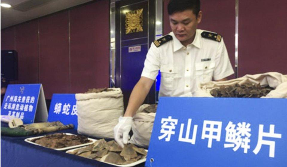 '15,000 pangolins slaughtered' for 7 tonnes of scales seized in China