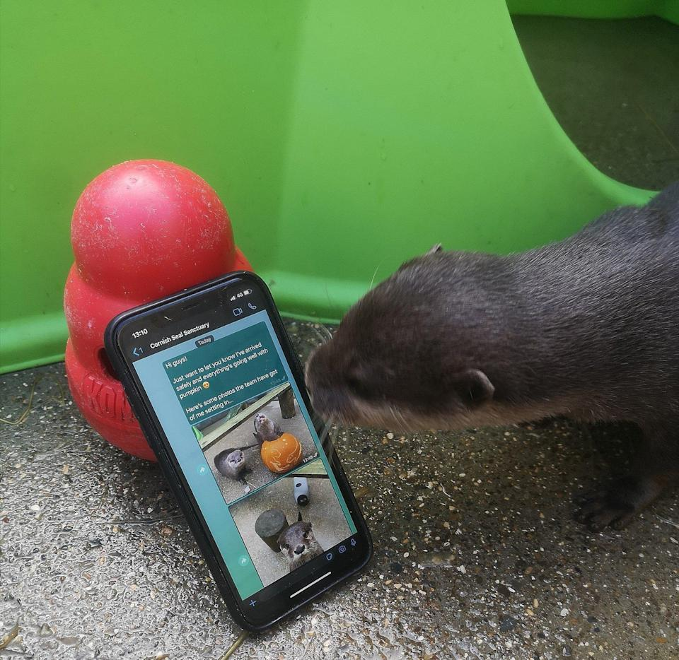 Otters were united using a dating app