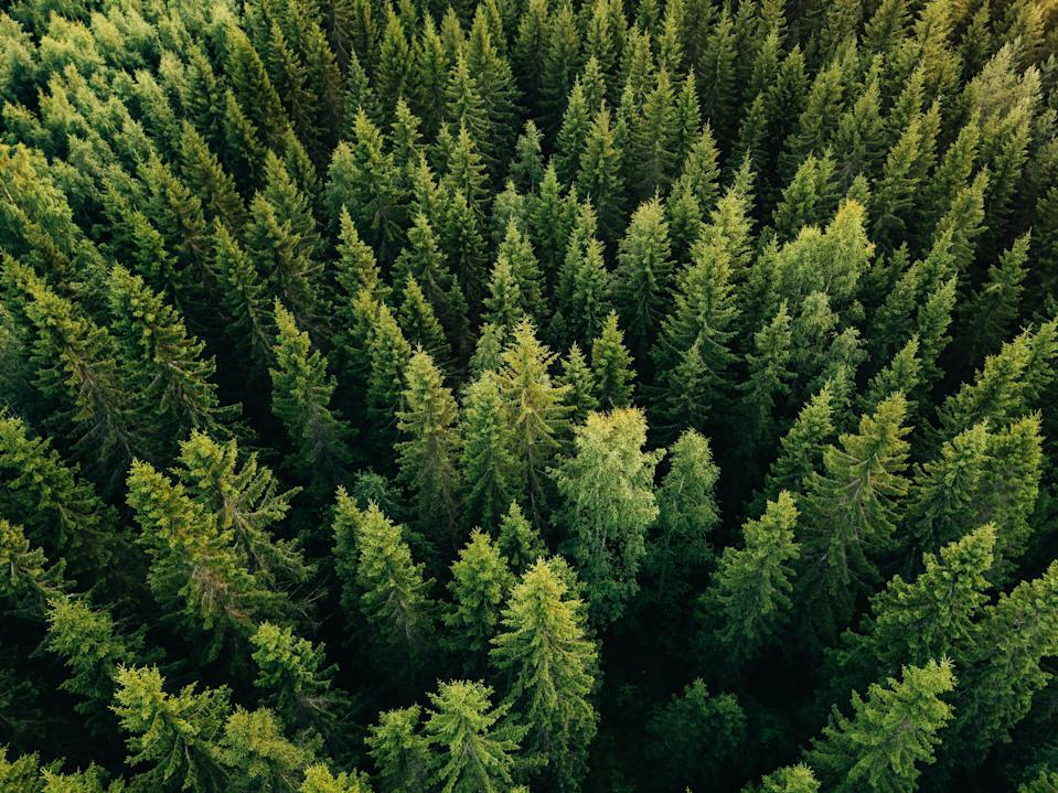 8. Every year, almost 50,000 species living in our forests become extinct: that's roughly 137 species daily.