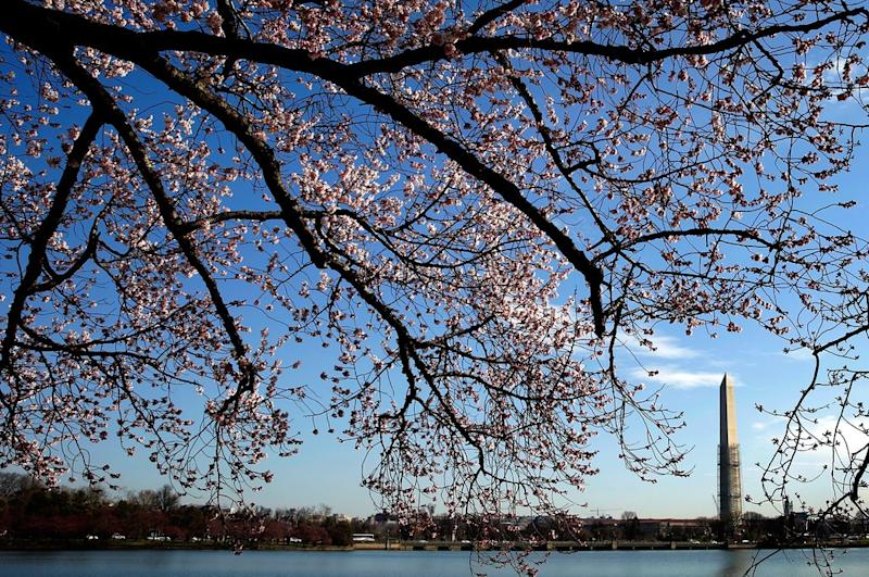 Get Cheap Amtrak Tickets to Washington, D.C. for Cherry Blossom Season