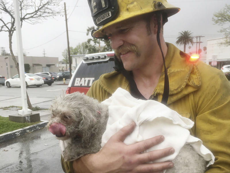Dog's best friend: Firefighter Andrew Klein spent 20 minutes giving Nalu lifesaving CPR: AP