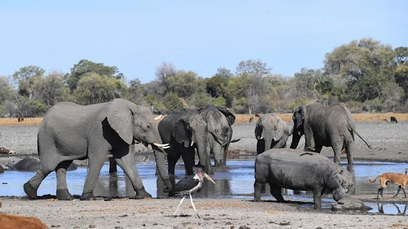Hundreds of elephants die in Botswana in mysterious circumstances