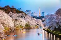 "<p>Japan's sakura (<a href=""https://www.goodhousekeeping.com/uk/lifestyle/travel/a28320847/japanese-cherry-blossom/"" rel=""nofollow noopener"" target=""_blank"" data-ylk=""slk:cherry blossoms"" class=""link rapid-noclick-resp"">cherry blossoms</a>) is one of the most beautiful and revered natural sights in the world. </p><p>Tourists travel from far and wide to celebrate the hanami (cherry blossom viewing) and walk and picnic among the pretty pink petals beloved by locals, which have been celebrated for thousands of years. </p><p>You can explore Japan during the peak of the blossom next year during a <a href=""https://www.goodhousekeepingholidays.com/tours/japan-cherry-blossom-tokyo-mount-fuji-cruise"" rel=""nofollow noopener"" target=""_blank"" data-ylk=""slk:luxury cruise"" class=""link rapid-noclick-resp"">luxury cruise</a> stopping at some of the country's most historic and intriguing cities – as well as landmarks like Mount Fuji.</p><p><strong>When?</strong> March 2022</p><p><strong>Duration:</strong> 17 days</p><p><strong>Price: </strong>From £3,899</p><p><a class=""link rapid-noclick-resp"" href=""https://www.goodhousekeepingholidays.com/tours/japan-cherry-blossom-tokyo-mount-fuji-cruise"" rel=""nofollow noopener"" target=""_blank"" data-ylk=""slk:FIND OUT MORE"">FIND OUT MORE</a></p>"