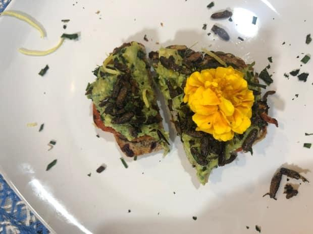 Cicadas are adding a crispy crunch to dishes like avocado toast after the thumb-sized bugs began emerging en masse in the eastern United States this spring, becoming the 'I dare you' snack of the year in the country.  (Sumayya Tobah/CBC - image credit)