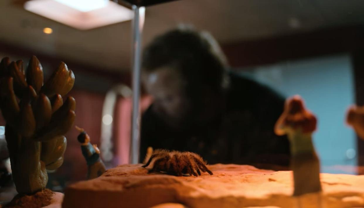 After Todd shockingly killed the young boy Drew Sharp (Samuel Webb) in Season 5 following the train heist, he kept Drew's tarantula. <br><br>You can see the tarantula again in Todd's pastel apartment.