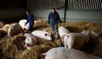 Farmers Kate Morgan (L) and Vicky Scott stand with some of their breeding sows on their family pig farm near Driffield